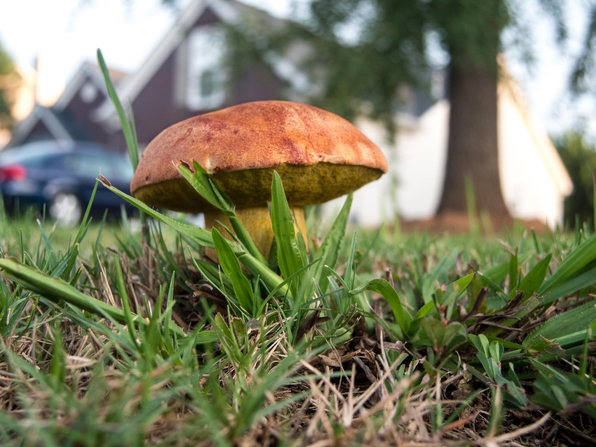 Toadstool. Toadstool | jrcastine, mushroom, autumn, ground