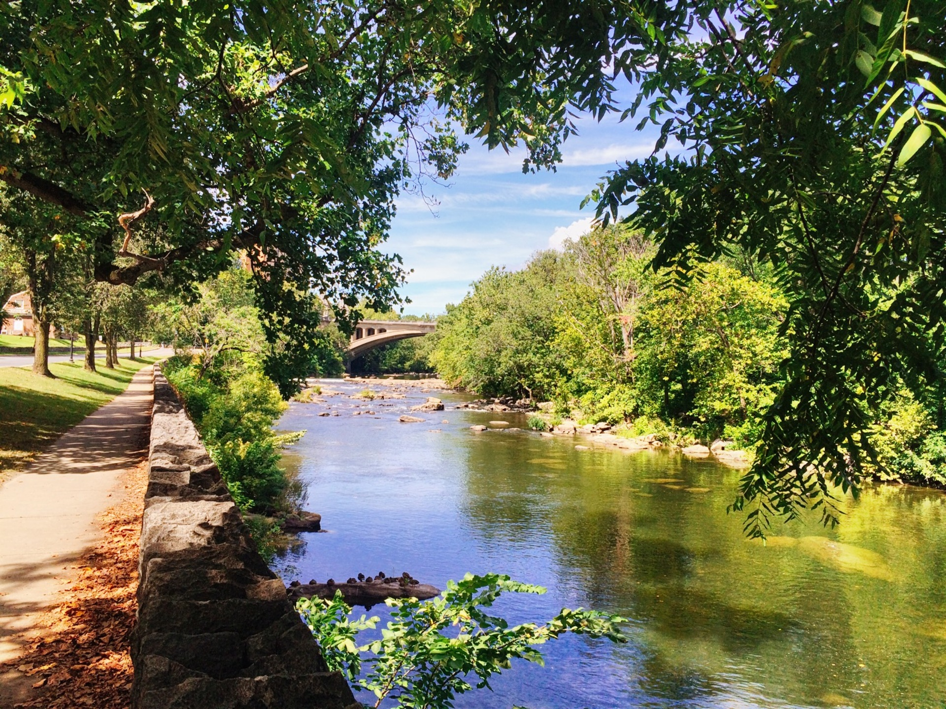 Beautiful river | ihd_capture, forest, nature, outdoors