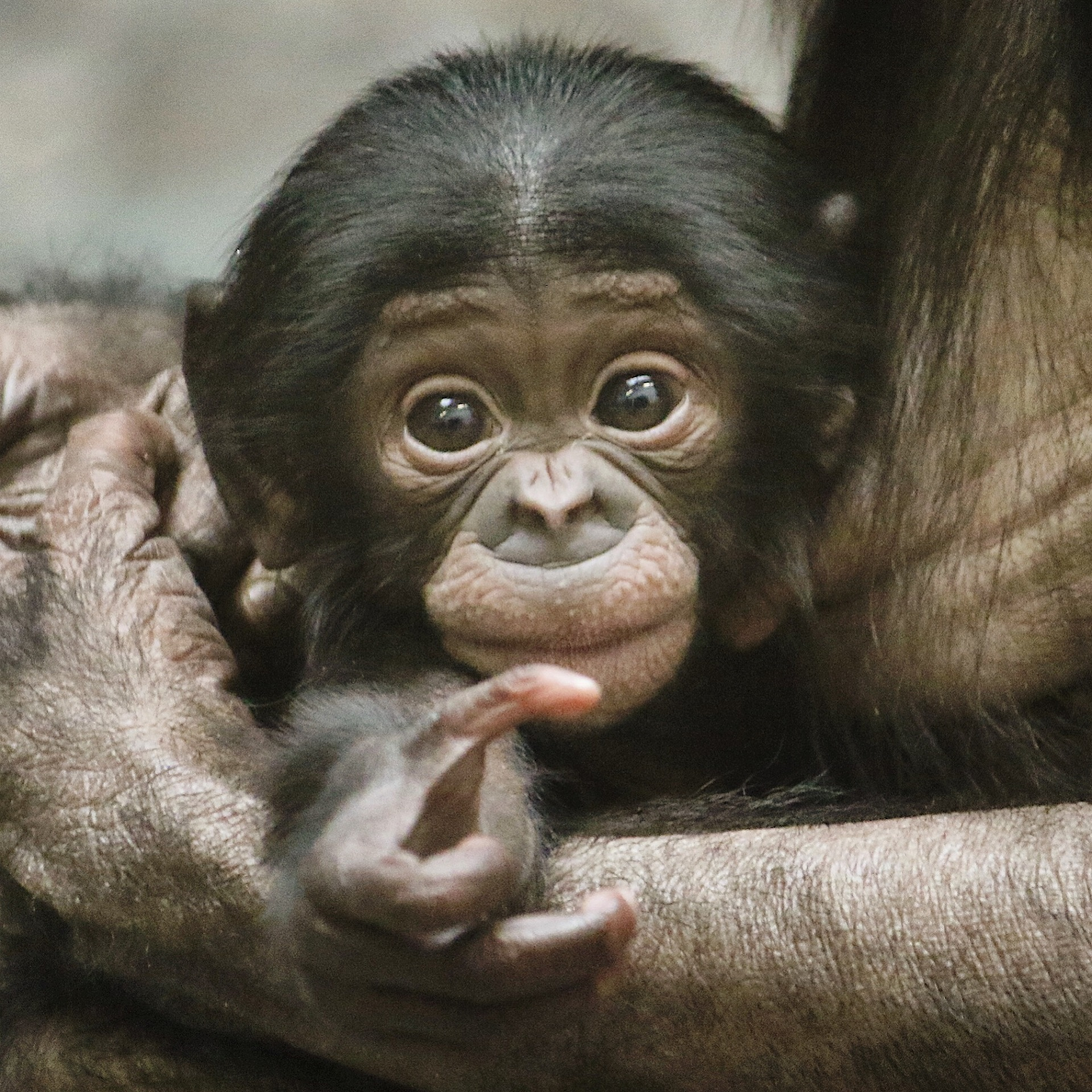 Animals captured on camera example photo
