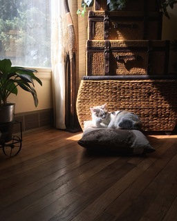 Favorite spot at home example photo