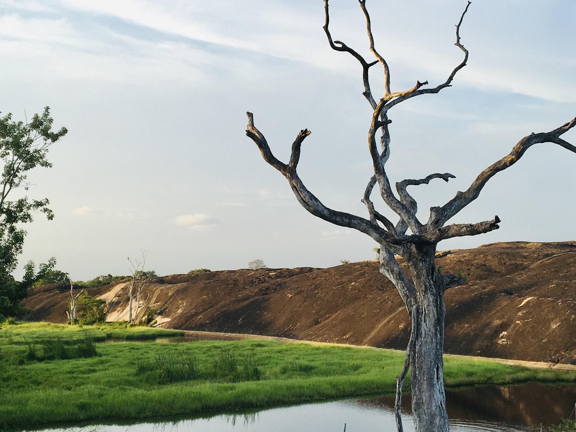 Trees around us example photo