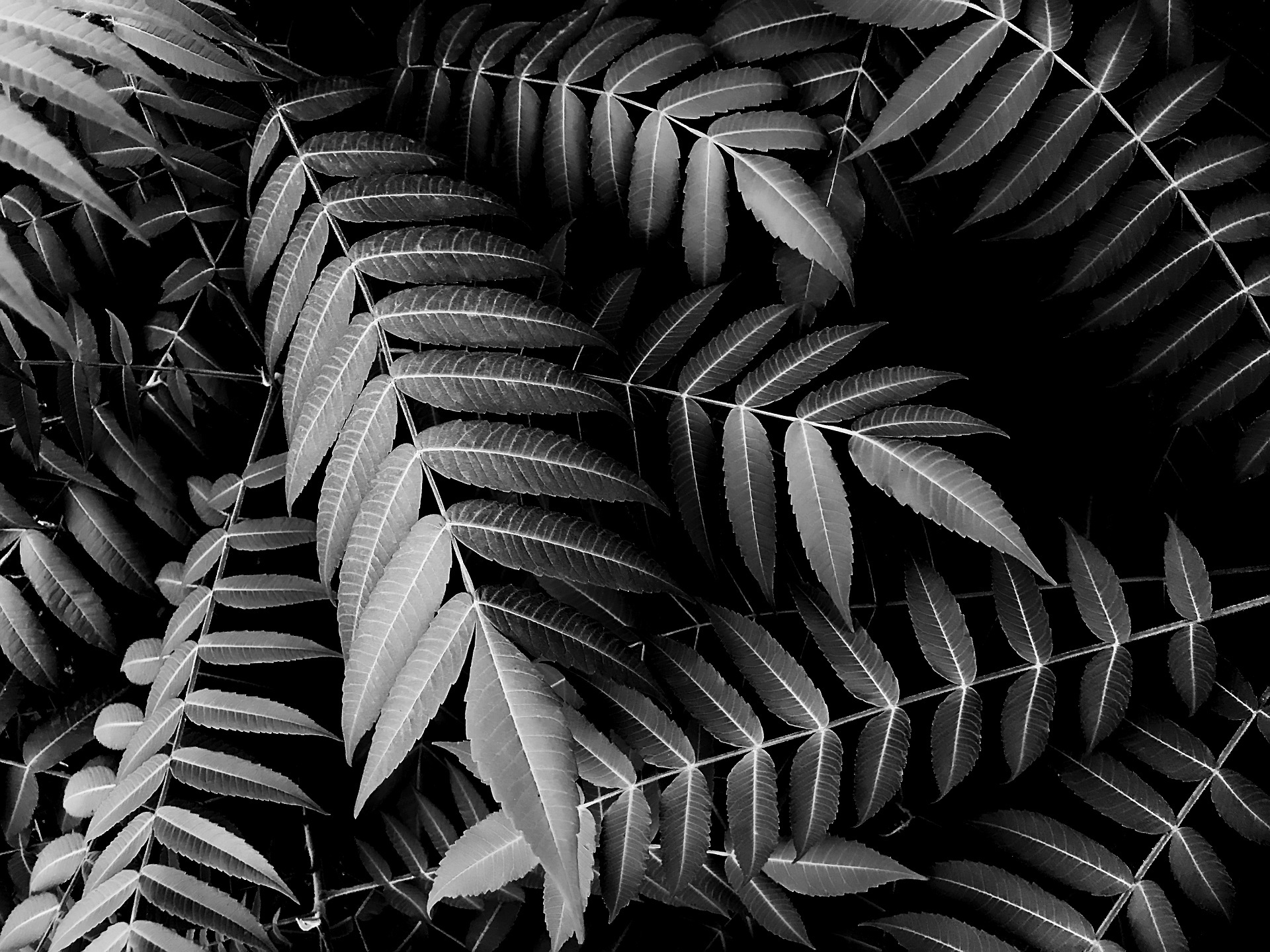 The beauty of black and white example photo